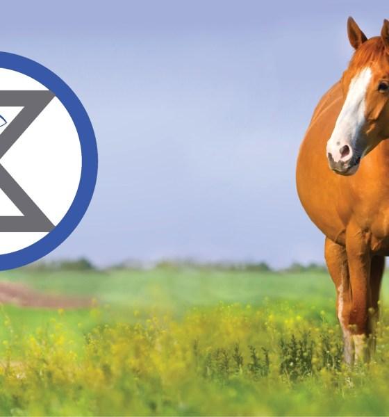 Horse gives birth